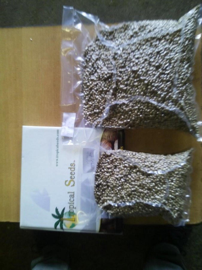 Tropical Seeds BV - Global trader of quality seeds